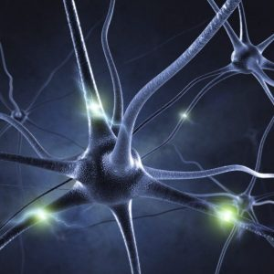 Zenuwstelsel Harmonie, breng rust in je zenuwstelsel