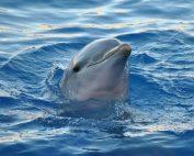 Dolfijn Spirit, zwem mee in de heerlijke verjongende energie van de dolfijnen